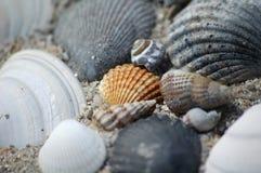 不列塔尼的壳 免版税库存图片
