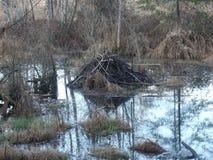 不列颠哥伦比亚省沼泽 库存照片