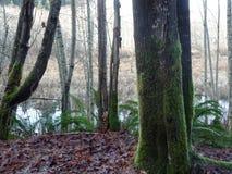 不列颠哥伦比亚省沼泽 免版税库存图片