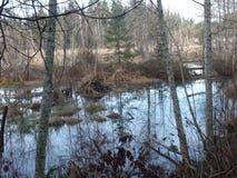 不列颠哥伦比亚省沼泽 免版税库存照片