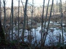 不列颠哥伦比亚省沼泽 免版税图库摄影