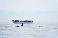 不列颠哥伦比亚省注意的鲸鱼 免版税库存照片