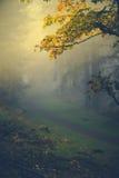 不可思议的光在秋天森林里 免版税库存图片