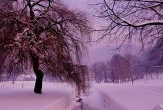 不可思议的冬天桃红色 免版税库存图片
