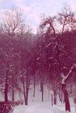 不可思议的冬天桃红色 库存图片