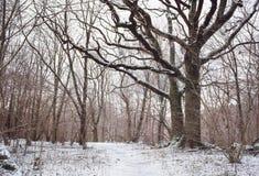 不可思议的冬天森林在一有薄雾,多雪的天 库存图片