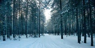 不可思议的冬天森林,一个童话, 免版税库存照片