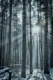 不可思议的冬天森林 免版税库存照片