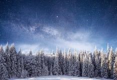 不可思议的冬天积雪的树 33c 1月横向俄国温度ural冬天 冬天湖在前面结冰 库存照片