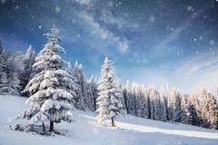 不可思议的冬天积雪的树 33c 1月横向俄国温度ural冬天 冬天湖在前面结冰 免版税库存照片