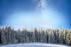 不可思议的冬天积雪的树 33c 1月横向俄国温度ural冬天 冬天湖在前面结冰 图库摄影