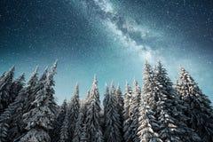 不可思议的冬天积雪的树 33c 1月横向俄国温度ural冬天 冬天湖在前面结冰 免版税图库摄影