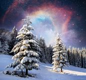 不可思议的冬天积雪的树 33c 1月横向俄国温度ural冬天 冬天湖在前面结冰 免版税库存图片