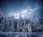 不可思议的冬天积雪的树 33c 1月横向俄国温度ural冬天 冬天湖在前面结冰 库存图片