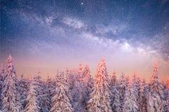 不可思议的冬天积雪的树 33c 1月横向俄国温度ural冬天 库存照片