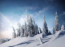 不可思议的冬天积雪的树 33c 1月横向俄国温度ural冬天 免版税库存照片