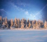 不可思议的冬天积雪的树 33c 1月横向俄国温度ural冬天 图库摄影
