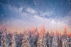 不可思议的冬天积雪的树 33c 1月横向俄国温度ural冬天 免版税库存图片