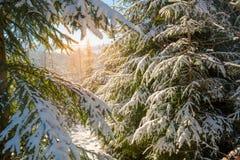 不可思议的冬天风景 库存图片