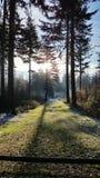 不可思议的冰冷的冬天森林 库存图片