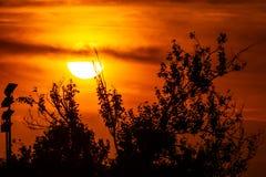 不可思议的在橙色天空的日落巨大的金黄太阳和在前景的一些树枝 太阳的徒升 免版税库存照片