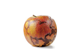 不可思议的在白色背景隔绝的苹果新鲜的特写镜头照片 免版税库存图片