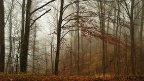 不可思议的天在森林 免版税库存照片