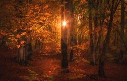 不可思议的太阳光在秋天森林里 免版税库存图片
