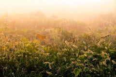 不可思议的平静的早晨在美丽的秋天草甸 免版税库存照片