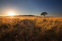 不可思议的日落在有一棵孤立树的非洲在小山和没有云彩 免版税库存照片