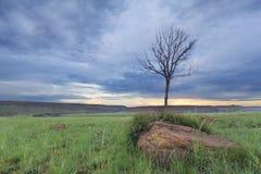 不可思议的日落在有一棵孤立树的非洲在小山和稀薄的云彩 免版税库存照片