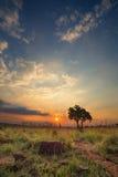 不可思议的日落在有一棵孤立树的非洲在小山和louds 库存照片
