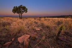 不可思议的日落在有一棵孤立树的非洲在小山和louds 库存图片
