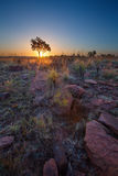 不可思议的日落在有一棵孤立树的非洲在小山和louds 免版税库存照片