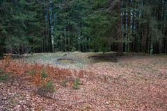 不可思议的春天森林 库存图片