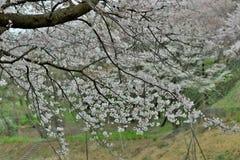 不可思议的春天风景在东京,日本 免版税库存照片