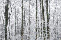 不可思议的有雾和冻结的冬天森林场面 有薄雾的风景后面 免版税库存图片
