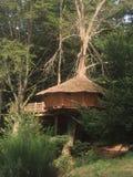 不可思议的树上小屋 库存图片
