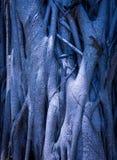 不可思议的树在天堂 免版税库存照片