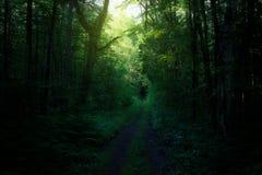 不可思议的森林公路通过树 免版税图库摄影