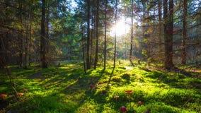 不可思议的森林和伞菌,与起重机的定期流逝 股票视频