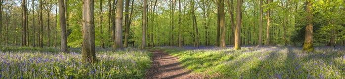 不可思议的森林和狂放的会开蓝色钟形花的草花 免版税库存照片