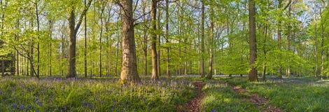 不可思议的森林和狂放的会开蓝色钟形花的草花 库存图片