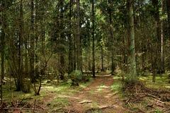 不可思议的森林在夏天或春天 高大的树木、居民的绿草和足迹 阴影和强光从落的太阳  库存图片