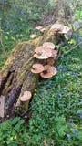 不可思议的森林地蘑菇 库存照片