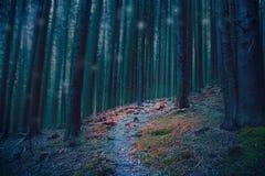 不可思议的森林道路在有蓝色树和红色青苔的森林 免版税库存照片