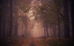 不可思议的森林黑暗的照片  库存图片