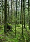 不可思议的森林 库存照片