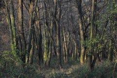 不可思议的森林 免版税库存图片