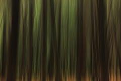 不可思议的森林 库存图片
